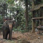 camp des éléphants
