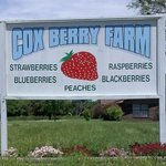 Cox Berry Farm & Nursery
