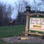Elk Visitor at Winslow Hill B&B