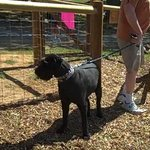 Large Fenced Dog Park with Agility Features