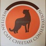 Cheetah Conservation at Safari park near Cape Town