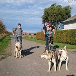 Een husky trekt +/-5 keer zijn gewicht en weegt tussen de 17-25kg dus kom je samen boven de 100