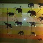 Árvore Genealógica do Elefante