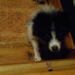 Our Dog, Mervin, trying to get a treat from the loft ladder :-)