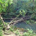 Monkey Bridge on Headhunters Trail
