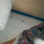 Bug Friendly MOTEL 6 GEORGETOWN KY