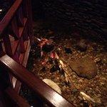 Kyoto - inside fish pond