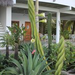 Our gorgeous garden
