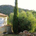 Le beau cyprès du jardin