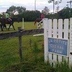 La Petite Cheval Farm