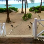 View from my bedroom at Kamalame Cay