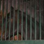 Another sad horse with no light or contact with others