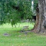Swing beneath Spirit Tree canopy