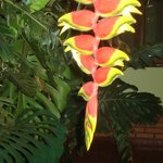 Plantas exuberantes