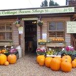 Get your pumpkins here!