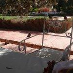 De la table, vue sur la piscine...et les oiseaux