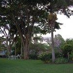 Stunning green lush gardens