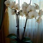 Орхидеи в каждом номере