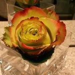 Живая красивейшая роза в ванной комнате