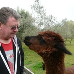 Twiggy, this kissing alpaca!