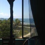 palms & ocean at amazing price
