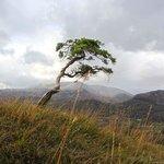 a small Juniper looking like a full size tree
