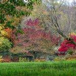RHS Rosemoor Lake in Autumn Colour