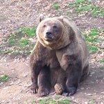 4 orsi bellissimi