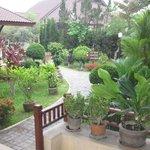 magnifique végétation dans les allées de l'hotel