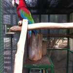Another Macaw