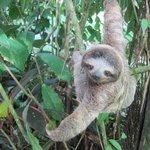 baby sloth in the hotel's garden