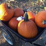 Biggggg Pumpkins!