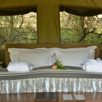 Airconditioned tented suites set in the African bush