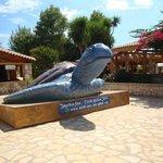 Schildkrötenmuseum