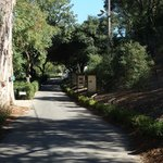 Beautiful grounds. Pathway to winery after parking car.