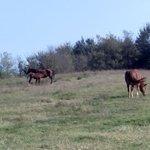 I cavalli della tenuta sono liberi di muoversi in un area vastissima