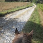 Countryside through Tappo's Ears