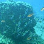 Inmersión Isla de Benidorm