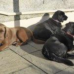 Friendly dogs at Downs Barn Farm