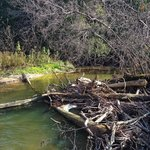 Greenwood Conservation Area - Trail Hikes