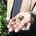White truffles, freshly unearthed