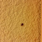 Bed bug...where there is one you know there are more!