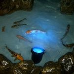 Peces en el acuario entrada