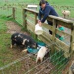 Feeding time on the farm tour.