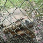 A friendly tortoise