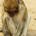 monkeys outside the cave