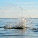 Dolphin Splash....up close!