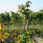 Wein-Gut Hutter Foto