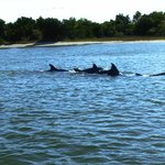 Dolphins taken from the Waterbug