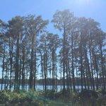 Foto de Honey Lake Plantation Resort & Spa